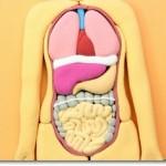腸内フローラの増やし方ー食事や食材は?たけしの家庭の医学で大反響!