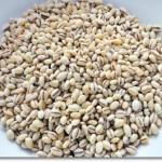 バーリーマックス大麦は通販で購入できる?楽天・Amazonではくばくが販売中!